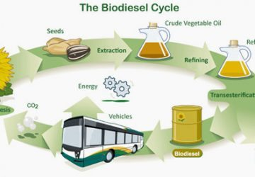 Biodiesel cycle